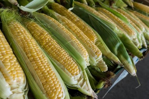 Unprocessed corn