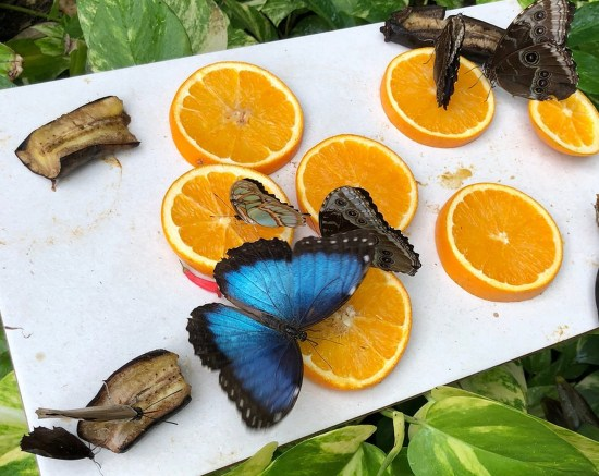 Aruba Butterfly Farm