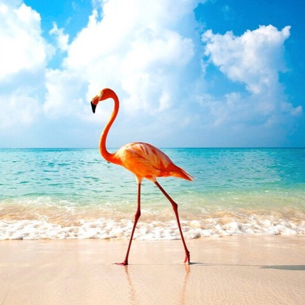 Pink Flamingo Beach in Aruba