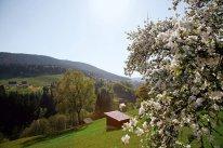 LuxeGetaways_Baiersbronn-Touristik_Blick-ins-Murgtal
