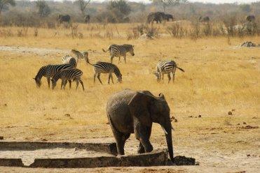 LuxeGetaways | Zimbabwe | PC Michael Sturrock