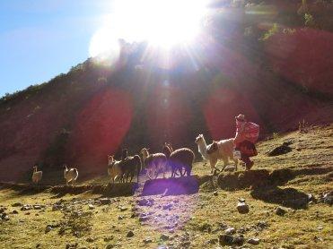 libertador_trekking-with-llamas_2