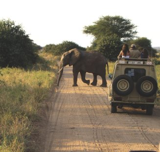 game-drive-elephant-crossing-road