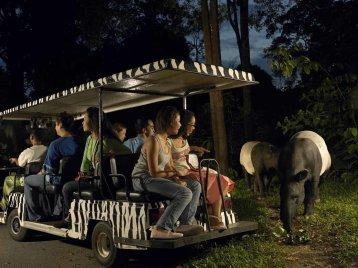 night-safari-tram-tour
