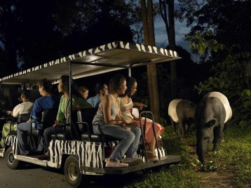 LuxeGetaways - Luxury Travel - Luxury Travel Magazine - Katie Dillon - LaJolla Mom - Family Travel - Singapore - Night Safari Tram Tour