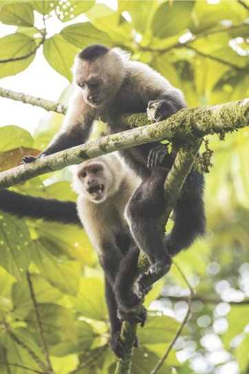LuxeGetaways - Luxury Travel - Luxury Travel Magazine - Tauck Travel - BBC Earth - Family Travel - jungle - monkey