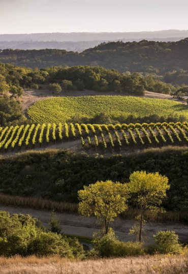 LuxeGetaways - Luxury Travel - Luxury Travel Magazine - Luxe Getaways - Luxury Lifestyle - California Wine Month - September 2017 - Wine Lovers - Wine Events - Vineyards