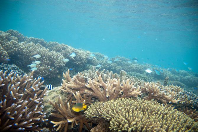 Barracuda Point A Spectacular Diving Adventure Awaits 1