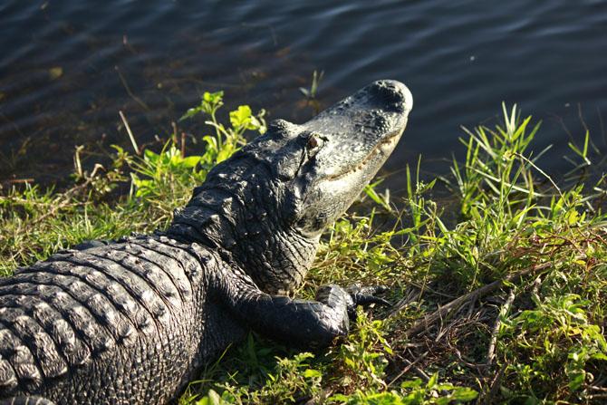 Everglades An Escape into Natures Wonderland 5