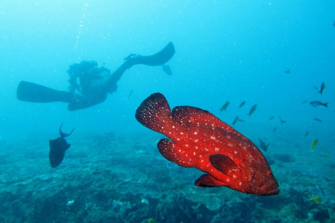 Top 5 Dive Sites in Africa South Africa 1