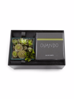 holiday-2016-ovando-dogwood-succulent-candle-box-the-luxe-lookbook