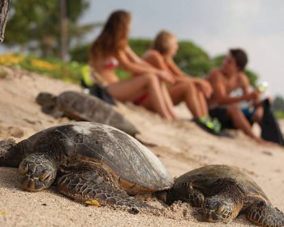 Share their beach with amazing sea turtles.