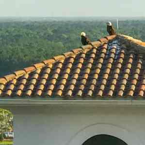 omni-champions-gate-best-Orlando-Resorts-near-disney--(83-of-4)