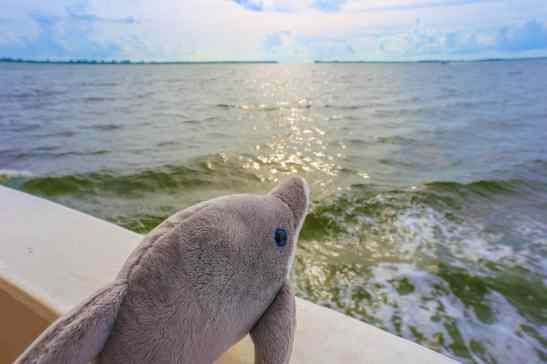 South Seas Plantation Captiva Island Florida- (29 of 56)