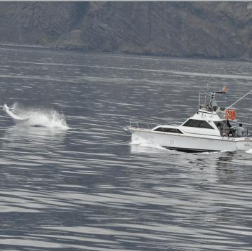 Big game charter and marlin fishing holidays.