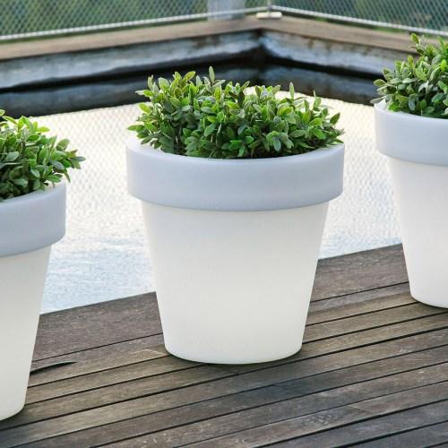 new garden magnolia plant pot 36