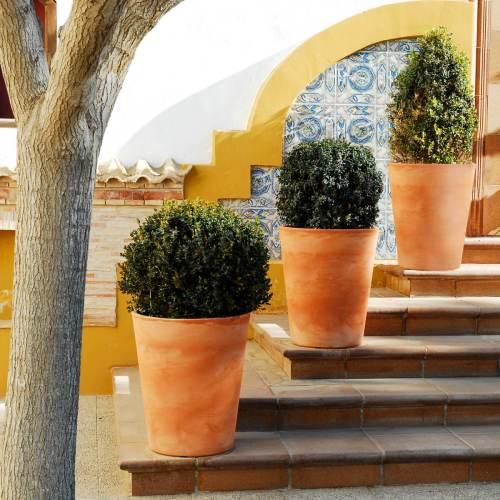 gerbera 53 plant pot 1