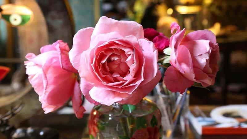 Ornano-roses