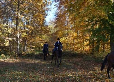 Det er et smukt syn at følge rytterne gennem efterårsskoven. Vènerie-jagt kan også foregå uden parforcevejsystemet, men får da en meget anderledes karakter.