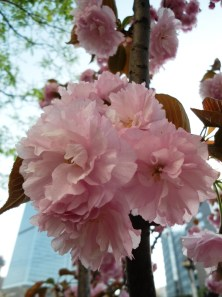 angela-asia-beijing-travel-blog-spring-flowers-in-bloom-2