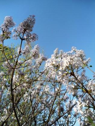 angela-asia-beijing-travel-blog-spring-flowers-in-bloom-4