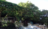angelas-asia-hong-kong-travel-blog-best-day-trip-tai-o-32