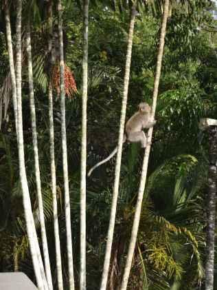 best-5-star-hotel-villa-ubud-alila-bali-luxury-bucket-list-blog-angela-carson-132