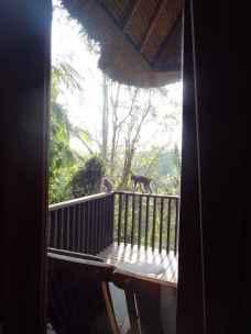 best-5-star-hotel-villa-ubud-alila-bali-luxury-bucket-list-blog-angela-carson-136