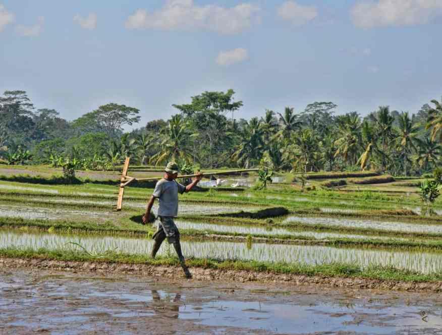 bali-rice-terrace-luxury-columnist