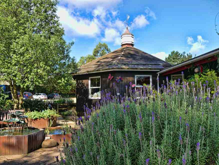 jersey_lavender_farm_visit