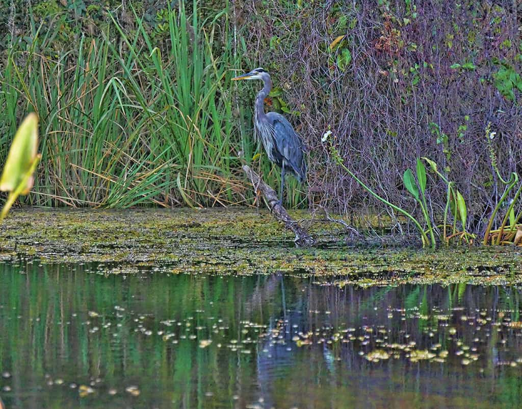 everglades-bird-spotting