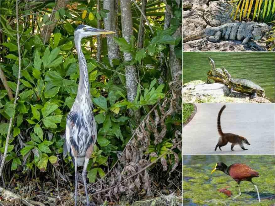 Andaz Mayakoba wildlife