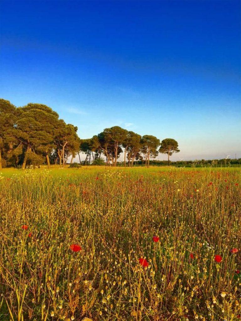 Amberlair garden Puglia Italy
