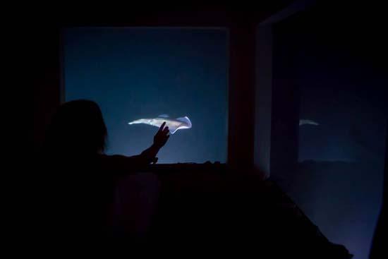 underwater-room-manta-resort-4