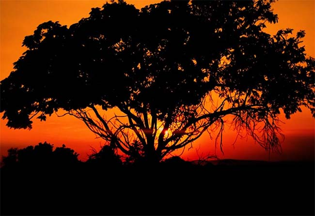 South Africa A Mavic Tale