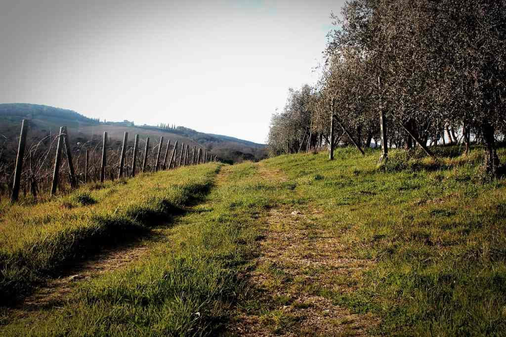 5 Adventures in Tuscany You MUST Have on Your Next Vacation hiking in Tuscany