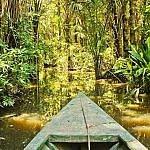 Amazon jungle trip Brazil