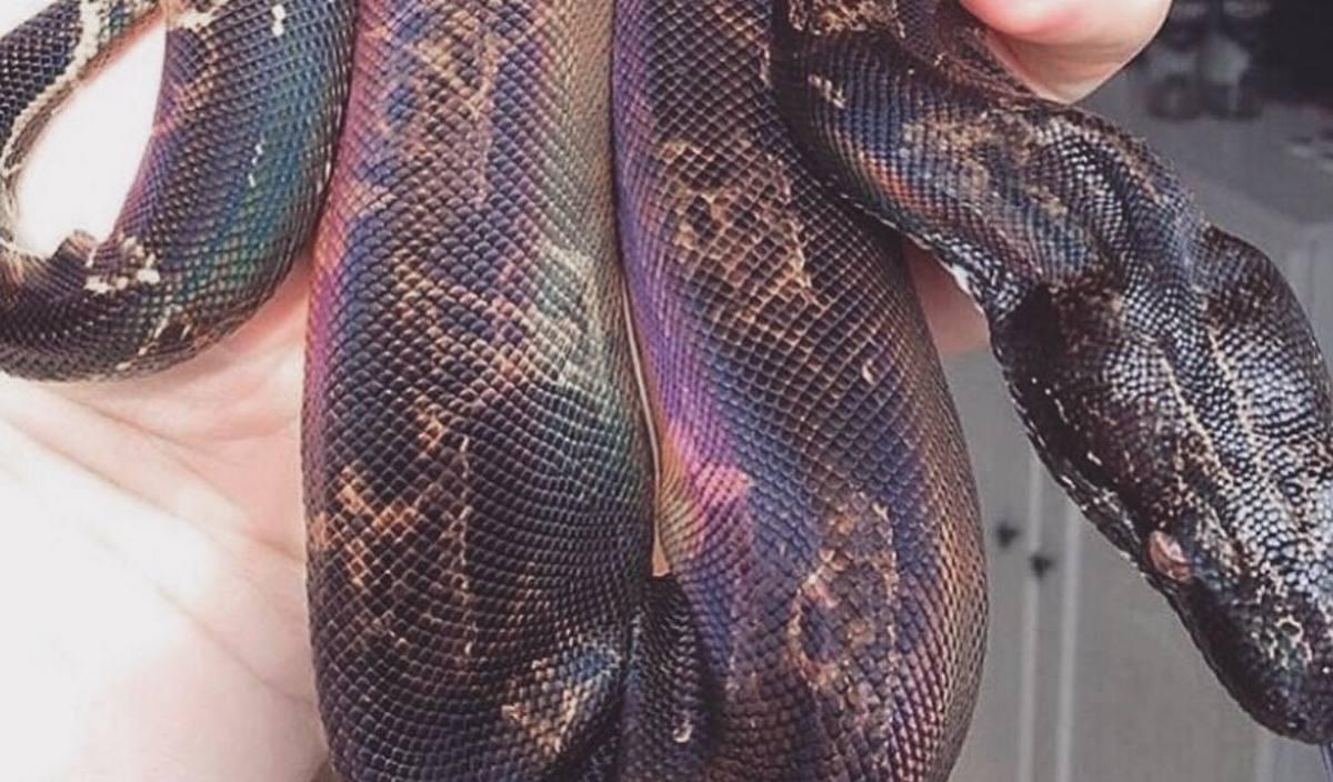 Kim Kardashian left her Instagram fans bewildered with a Louis Vuitton printed snake