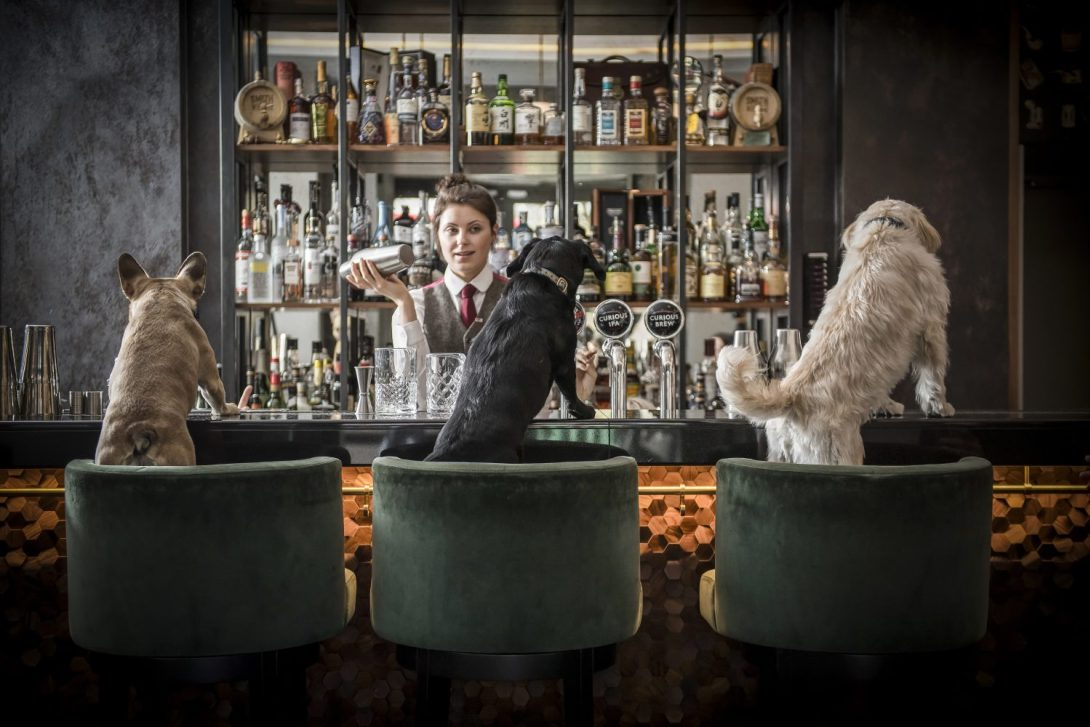 This London Bar Has The World S First Drinks List For Dogs