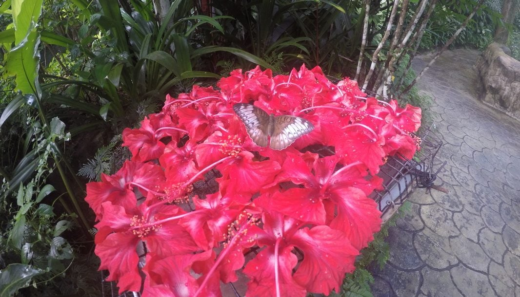 the-butterfly-park-experiences-in-kuala-lumpur-the-traveller-s-guide-by-ljojlo_orig