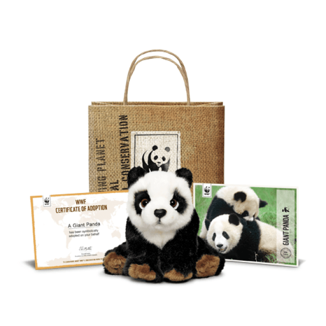 online-giving-panda-adoption.png