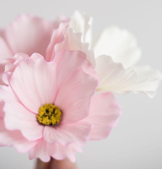 Petalsweet-cosmos-flowers.jpg