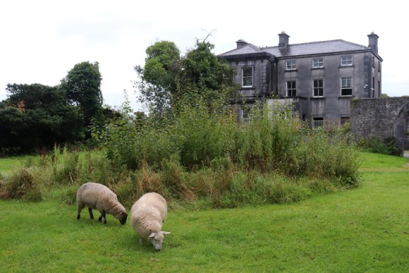 Annaghmore Sligo Lawn © Lavender's Blue Stuart Blakley