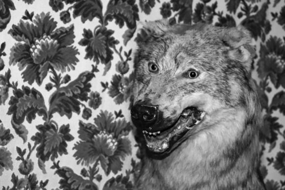 Belleek Castle Hotel Mayo Wolf © Lavender's Blue Stuart Blakley