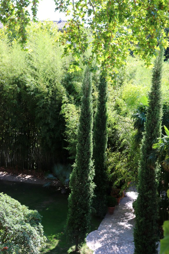 Trees La Divine Comedie Avignon © Lavender's Blue Stuart Blakley