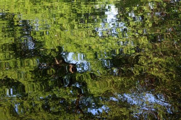 Belair House West Dulwich London Lake © Lavender's Blue Stuart Blakley