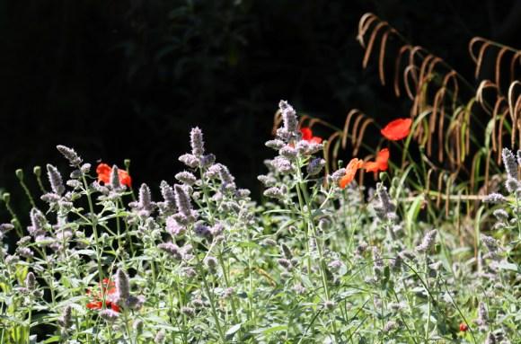 Plants Chelsea Physic Garden London © Lavender's Blue Stuart Blakley
