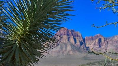 Joshua tree and mountain