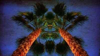 palm-symmetry