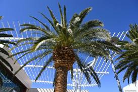 Palm Tree at Downtown Summerlin